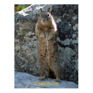 Standing Squirrel Postcard