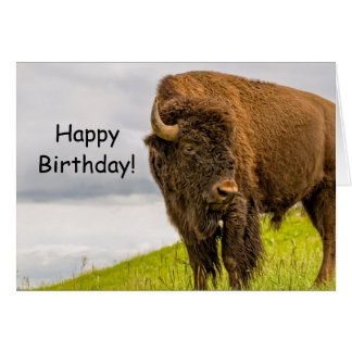 Stands Out From the Herd Birthday Card
