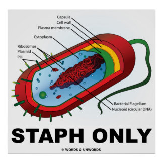 Staph Only (Bacteria Prokaryote) Poster