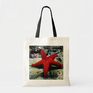 Star Fish | Red Sea