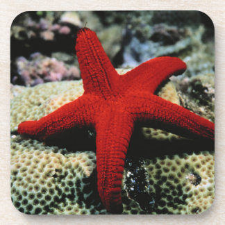 Star Fish | Red Sea Drink Coasters