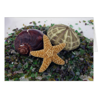 Star Fish, Shell & Urchin Card