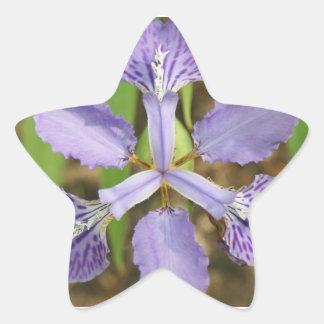 Star Iris Stickers