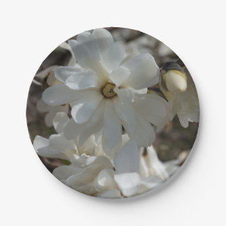 Star Magnolia Blooms Paper Plate