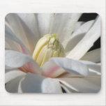 Star Magnolia Mouse Pad