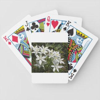 Star of Bethlehem flowers  Ornithogalum umbellatum Bicycle Playing Cards