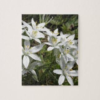 Star of Bethlehem flowers  Ornithogalum umbellatum Jigsaw Puzzle