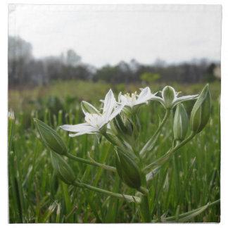 Star of Bethlehem flowers  Ornithogalum umbellatum Napkin