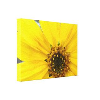 Starburst Sunflower Canvas Print
