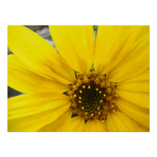 Starburst Sunflower Poster