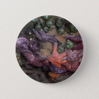 Starfish 2 Inch Round Button
