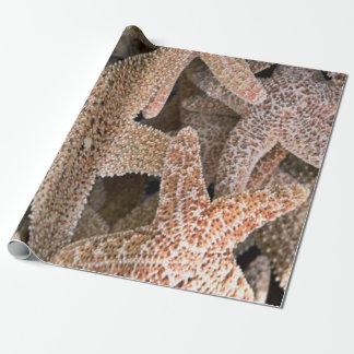 Starfish all around