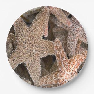 Starfish all around paper plate
