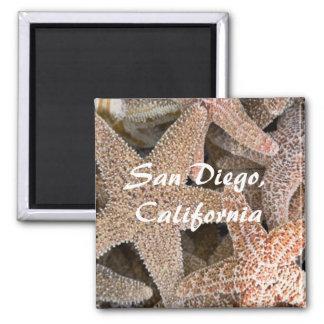 Starfish all around , San Diego , California Square Magnet