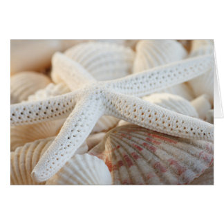 STARFISH AND SEASHELLS NOTECARD