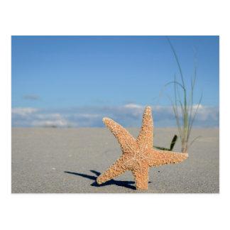 Starfish at the beach postcard