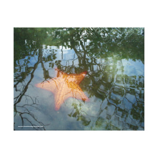 Starfish in the Bog Canvas Print