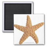 Starfish isolated on white magnet