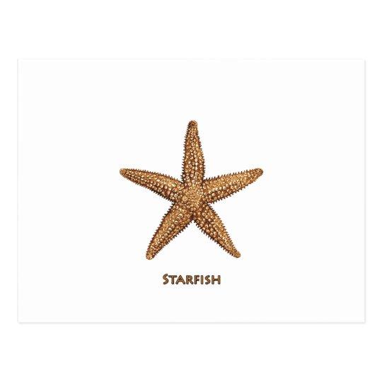 Starfish - Northern Sea Star Postcard