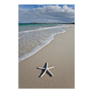 Starfish On A Remote Beach Poster