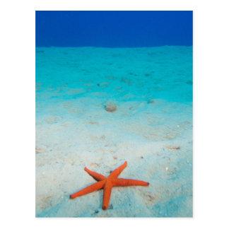 Starfish on a sand dune underwater postcard
