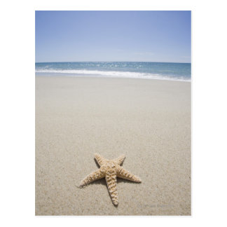 Starfish on beach by Atlantic Ocean Postcard