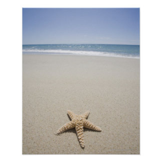 Starfish on beach by Atlantic Ocean Poster