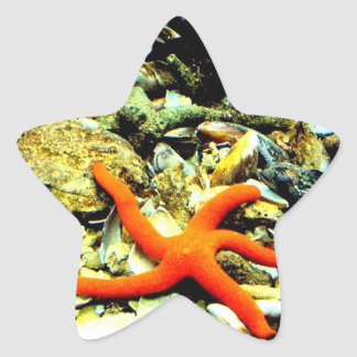 Starfish on Star Star Sticker