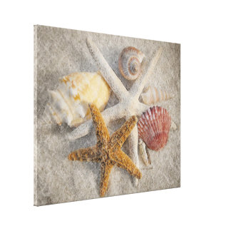 Starfish/Shell/Sand Beach Still Life Canvas Print