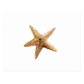 Starfish starfishes design paiting postcard