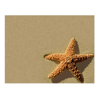Starfish Tropical Event Beach Wedding Invitation Postcard