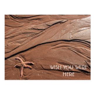Starfish Wish You Were Here Postcard