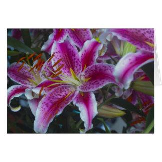 Stargazer Lilies Pink & Magenta Card