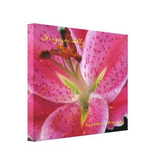 Stargazer Lilly Wrapped Canvas