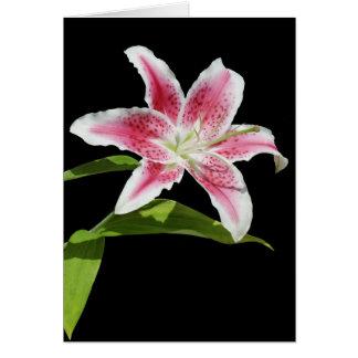 Stargazer Lily Card