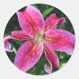 Stargazer Oriental Lily Classic Round Sticker