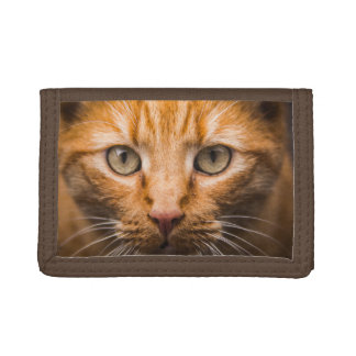 Staring Cat wallets