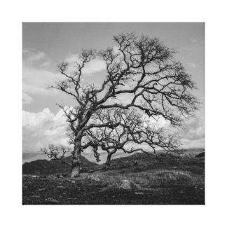 Starkness Of Winter Canvas Print