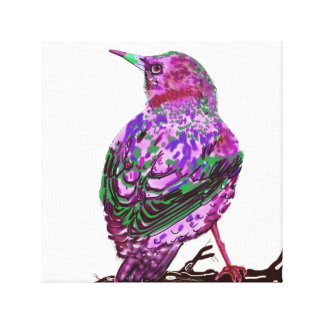 Starling on Canvas