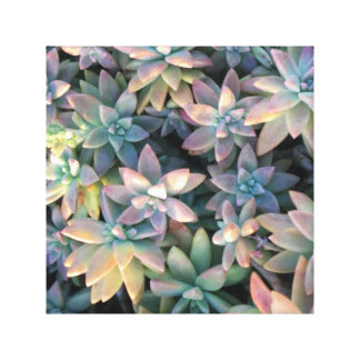 Starry Cactus Plant with Pink, and Green Embellish Canvas Print