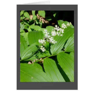 Starry Solomon's Seal Blank Note Card