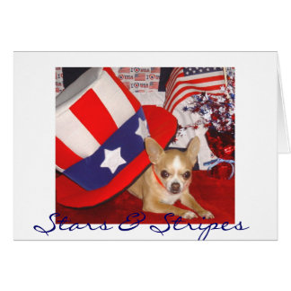 Stars & Stripes Chihuahua Card