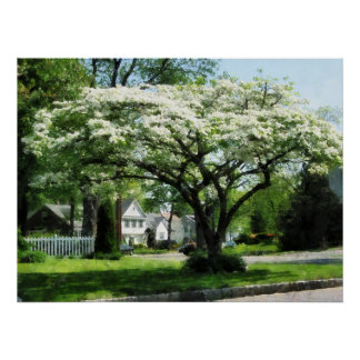 STARTING UNDER $20 - Street With Dogwood Poster
