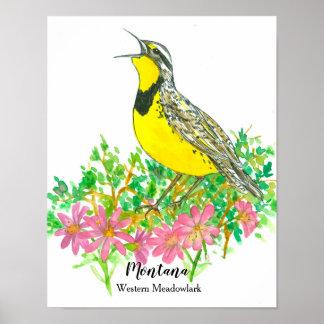 State Bird of Montana Meadowlark Bitterroot Flower Poster