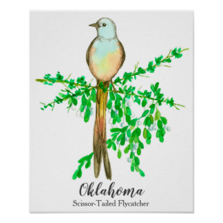 State Bird of Oklahoma Scissor Tailed Flycatcher Poster