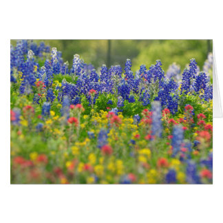 Stately Bluebonnets Card