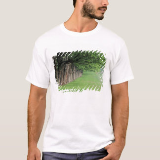 Stately row of trees, Louisville, Kentucky. T-Shirt