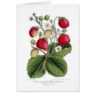 Stawberry Card