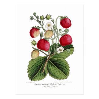 Stawberry Postcard