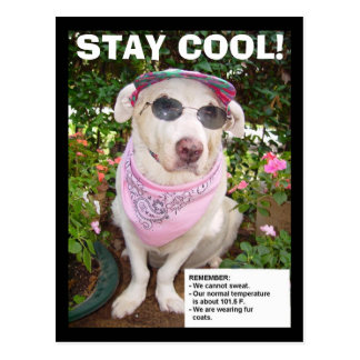 STAY COOL! POSTCARD